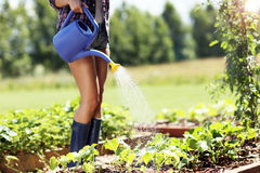 Woman watering plants outside in summer Royalty Free Stock Photo