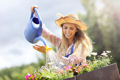 Woman watering plants outside in summer Stock Image