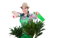Woman watering plants Stock Photo