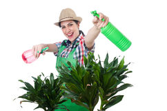 Woman watering plants Stock Image