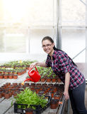 Woman watering sprouts in greenhouse Royalty Free Stock Image