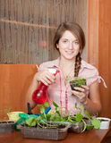 Woman watering  various sprouts Stock Photos