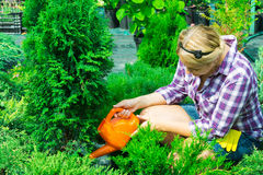 Woman watering watering fir tree. Woman caring for green plants Royalty Free Stock Image