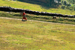 Woman on the way home, pokhara,nepal royalty free stock image