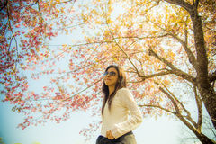 Woman wear eyeglass with pink cherry flower tree Royalty Free Stock Image