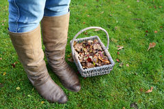Woman wearing boots standing with a basket of fall leaves Royalty Free Stock Photography