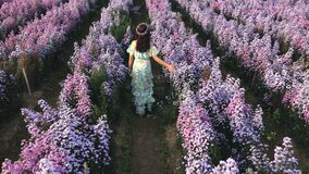 Woman wearing a dress in a Margaret flower field, Chiang Mai