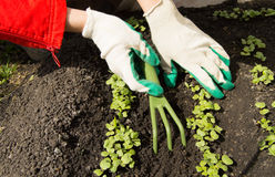 Woman wearing gardening gloves holding a rake and shovel, caring for plants in the garden Stock Photo