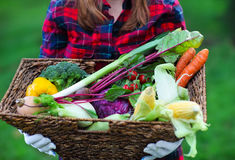 Woman wearing gloves with fresh vegetables in the box in her han Stock Image