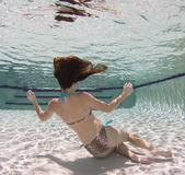 A woman wearing a leopard pring swimsut underwater. Royalty Free Stock Image