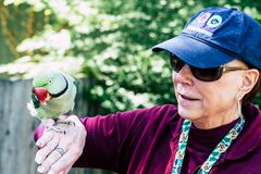 Woman Wearing Maroon Sweater and Blue Cap Raising Her Right Hand While Rose-ringed Parrot Perching on It Stock Photo