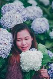 A woman wearing a red shirt in a hydrangea garden stock image