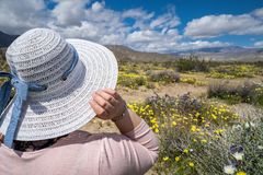 Woman wearing a sun straw hat looks out to wildflowers in the desert in Anza Borrego State Park in California during the stock photos