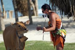 Woman wearing sunglasses takes selfie with a cow in Lombok, Vietnam. Woman wearing sunglasses takes selfie with a brown cow near beautiful blue beach in Lombok Stock Photo