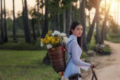 Woman wearing a Vietnamese dress Ao Dai are ride on a bicycle. Along the road in a village at countryside,Woman Vietnam ride on a bicycle royalty free stock photos