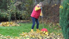 Woman wearing waistcoat, jeans and gumboots rake vivid yellow autumn leaves. 4K. Attractive woman wearing red waistcoat, jeans and gumboots raking vivid yellow stock footage