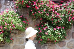 Woman Wearing White Bucket Hat With White Top Beside Pink Petaled Flower at Daytime Royalty Free Stock Images
