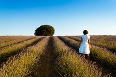 Woman wearing white dress at lavender fields. Rear view. Summer Stock Images