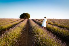 Woman wearing white dress at lavender fields. Rear view. Summer Stock Photo