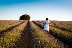 Woman wearing white dress at lavender fields. Rear view. Summer Stock Image