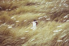 Woman Wearing White Dress Standing in the Middle of Grasses Royalty Free Stock Photo