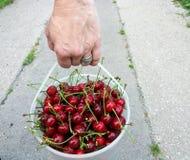 Woman wears cherries in a bucket Stock Images