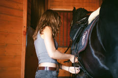 Woman horseman cleans from dirt with brush Friesian horse in stables on farm. Woman wears a saddle horseman Friesian horse in the stables on the farm, taking royalty free stock photography