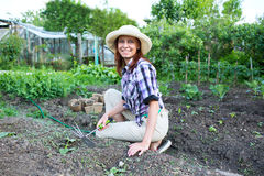 Woman weeding the beds with sprouts zucchini in the garden Royalty Free Stock Photo