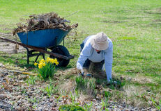 Woman weeding a flower bed Stock Photography