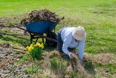 Woman weeding spring flowers Stock Photo