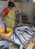 Woman weighs and sells large fish on the market. Royalty Free Stock Photography