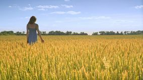 Woman in wheat field landscape. Agriculture land. Girl touching wheat ears stock video