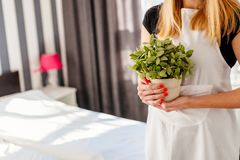 Woman in white apron holding house plant Royalty Free Stock Images
