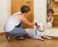 Woman with white big dog Royalty Free Stock Photo