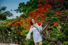 Woman on white dress next to a beautiful flowered tree  at the walls surrounding the colonial city of Cartagena de Indias. A Woman on white dress next to a royalty free stock photos