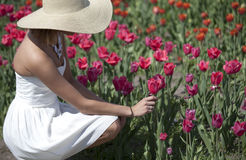 Woman in white dress in Tulip Field. A woman in a white dress and large hat bend down to admire a pretty tulip in a large tulip field Royalty Free Stock Photo