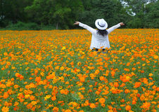 Woman in white feeling happy in the blooming yellow Cosmos flowers field Stock Images