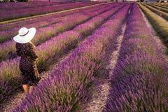 Lavender field summer stock photo