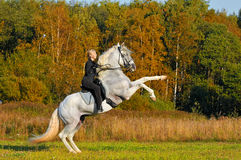 Woman on white horse in autumn. Woman on white pura raza espanola horse Royalty Free Stock Photos