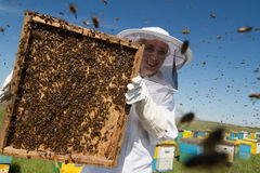 Woman in white suit beekeeping. Horizontal front view of one woman beekeeper holding the honeycomb of a beehive with bees swarming Royalty Free Stock Images