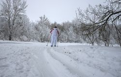 A woman in a white tracksuit running on skis on the track laid in the woods royalty free stock photography