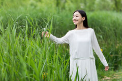 Woman in whiter dress summer amidst reed Stock Photography