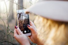 Woman in wide-brimmed felt hat taking a picture of foggy forest with mobile phone. Closeup, blurry foreground.  stock photo