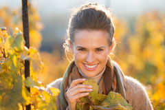 Woman winegrower inspecting grape vines in autumn vineyard Royalty Free Stock Images
