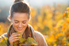 Woman winegrower inspecting grape vines in autumn vineyard. Portrait of smiling young brunette woman winegrower looking on grape vines in vineyard outdoors in Stock Photography