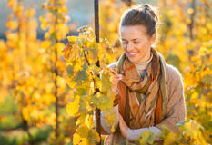Woman winegrower inspecting vines in vineyard outdoors in autumn Royalty Free Stock Images