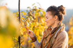 Woman winegrower inspecting vines in vineyard outdoors in autumn. Smiling brunette woman winegrower inspecting grape vines in vineyard outdoors in autumn. Small Stock Images