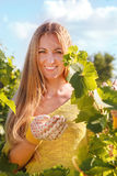 Woman winegrower picking grapes Royalty Free Stock Photo