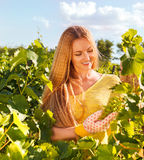 Woman winegrower picking grapes at harvest time. In the vineyard Stock Photo