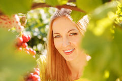 Woman winegrower picking grapes Royalty Free Stock Image